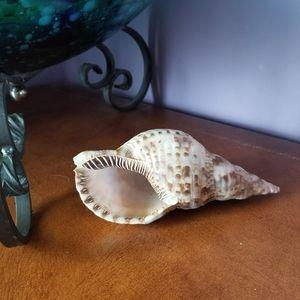 Medium Seashell